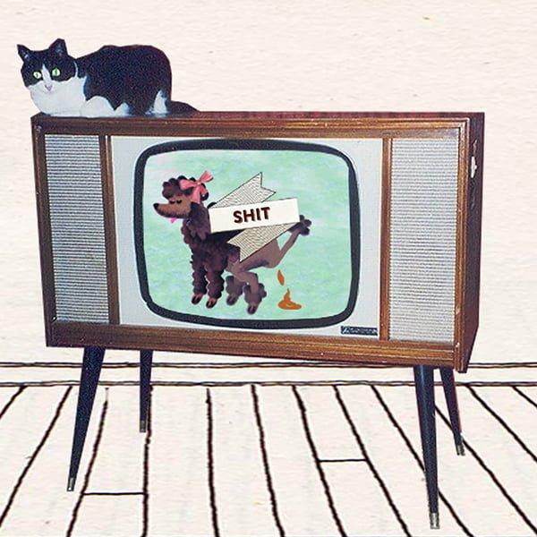 honden dogs dogs of rotterdam, rotterdam tv, open rotterdam, animatie, video